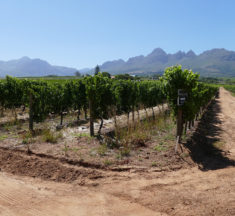 Wine tasting in Stellenbosch, one of the most popular Wine Valleys in South Africa