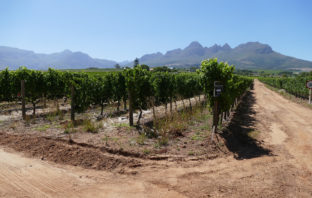 Stellenbosch Wine Valley